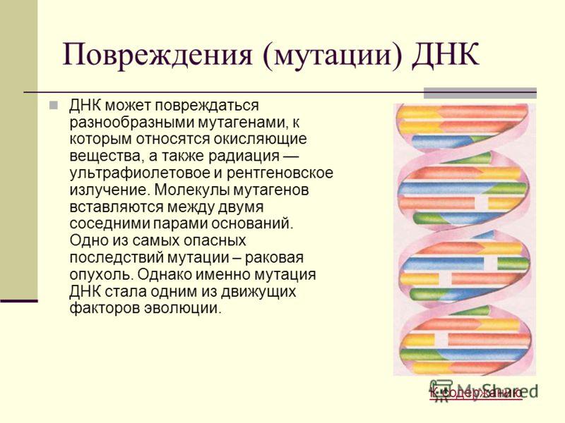 Повреждения (мутации) ДНК ДНК может повреждаться разнообразными мутагенами, к которым относятся окисляющие вещества, а также радиация ультрафиолетовое и рентгеновское излучение. Молекулы мутагенов вставляются между двумя соседними парами оснований. О