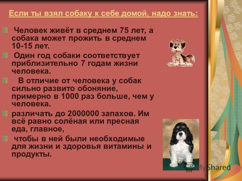Человек живёт в среднем 75 лет, а собака может прожить в среднем 10-15 лет. Один год собаки соответствует приблизительно 7 годам жизни человека. В отличие от человека у собак сильно развито обоняние, примерно в 1000 раз больше, чем у человека. различ