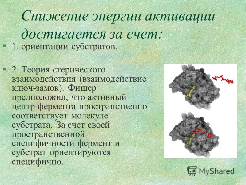 Снижение энергии активации достигается за счет: §1. ориентации субстратов. §2. Теория стерического взаимодействия (взаимодействие ключ-замок). Фишер предположил, что активный центр фермента пространственно соответствует молекуле субстрата. За счет св