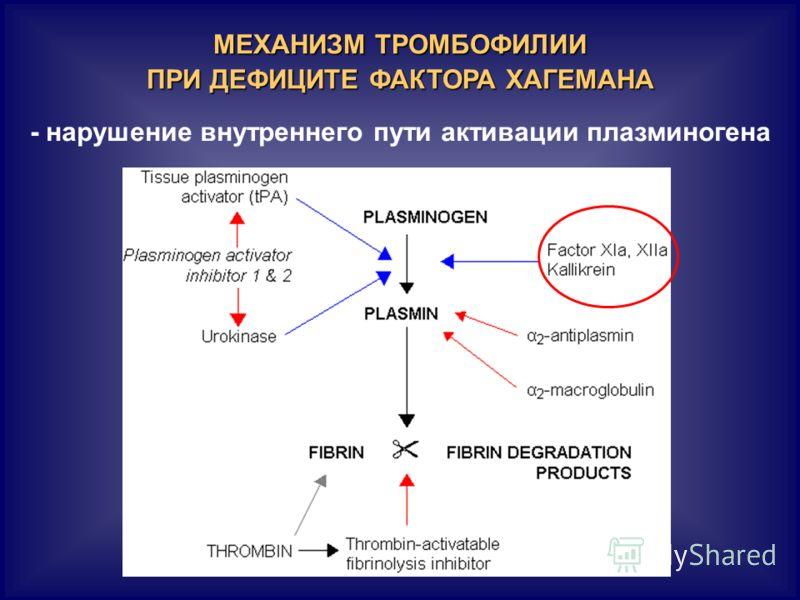 МЕХАНИЗМ ТРОМБОФИЛИИ ПРИ ДЕФИЦИТЕ ФАКТОРА ХАГЕМАНА - нарушение внутреннего пути активации плазминогена