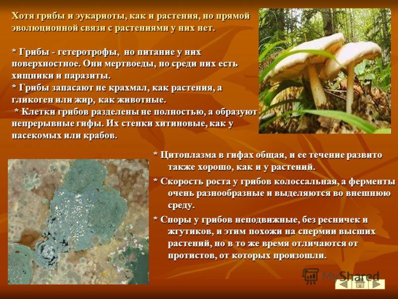 Микология – наука о грибах (от греческого слова микос - гриб) зародилась на Балканском полуострове, заселенном в то время греками. Первое упоминание о грибах встречается в трудах великого врача Древней Греции Гиппократа и относится к V веку до нашей