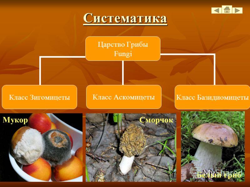 Что же общего и различного у грибов с растительными и животными организмами? а) гетеротрофный способ питания – питание готовыми органическими веществами. б) отсутствуют хлорофилл и пластиды; в) клеточная стенка содержит хитин и полисахариды; г) основ