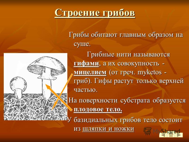 Систематика Царство Грибы Fungi Класс Зигомицеты Класс Аскомицеты Класс Базидиомицеты МукорСморчок Белый гриб