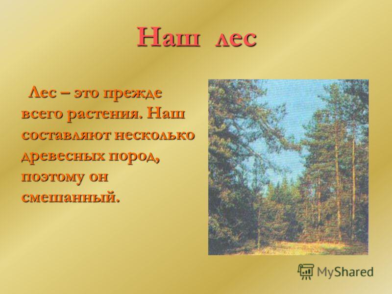 Наш лес Лес – это прежде всего растения. Наш составляют несколько древесных пород, поэтому он смешанный.