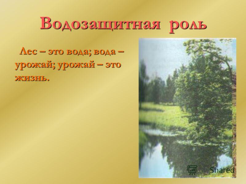 Водозащитная роль Лес – это вода; вода – урожай; урожай – это жизнь.