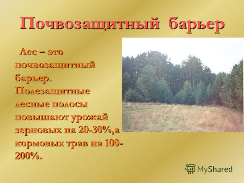 Почвозащитный барьер Лес – это почвозащитный барьер. Полезащитные лесные полосы повышают урожай зерновых на 20-30%,а кормовых трав на 100- 200%.