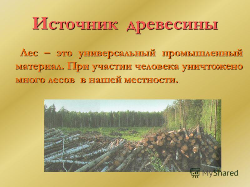 Источник древесины Лес – это универсальный промышленный материал. При участии человека уничтожено много лесов в нашей местности.