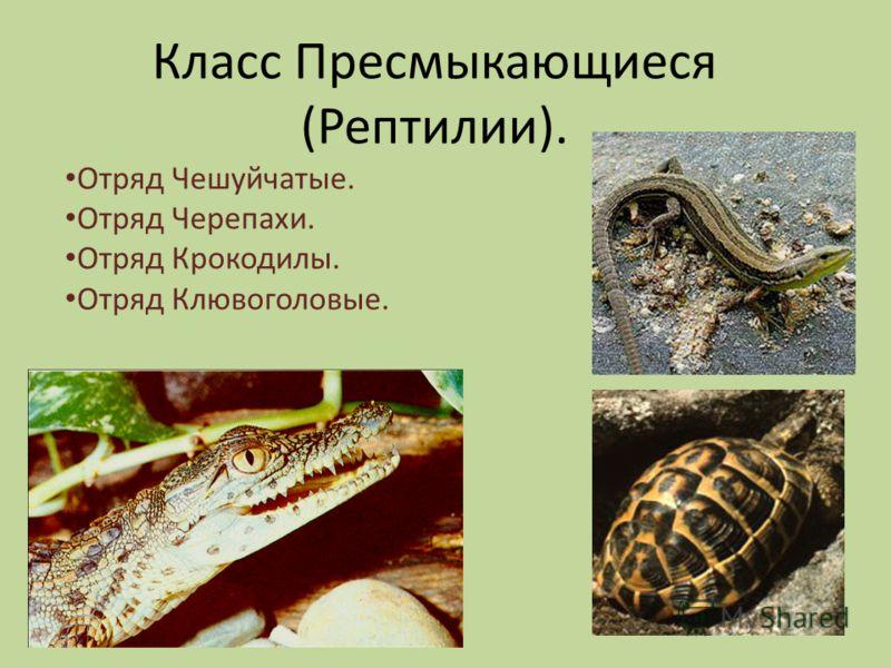 Класс Пресмыкающиеся (Рептилии). Отряд Чешуйчатые. Отряд Черепахи. Отряд Крокодилы. Отряд Клювоголовые.