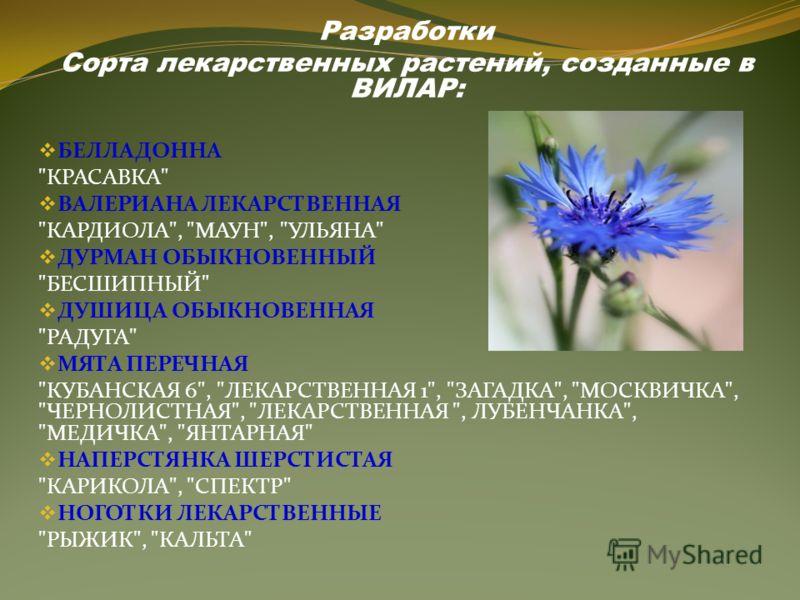 Разработки Сорта лекарственных растений, созданные в ВИЛАР: БЕЛЛАДОННА