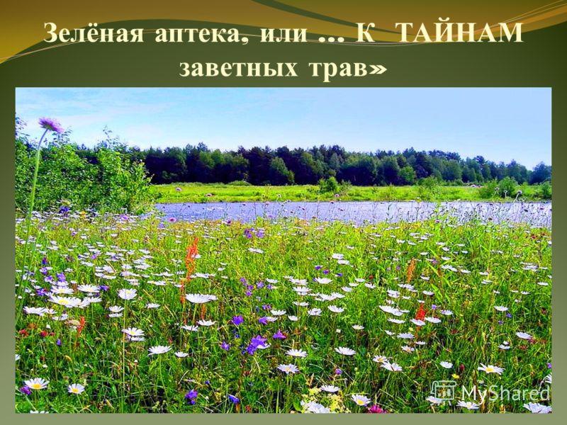 Зелёная аптека, или … К ТАЙНАМ заветных трав »