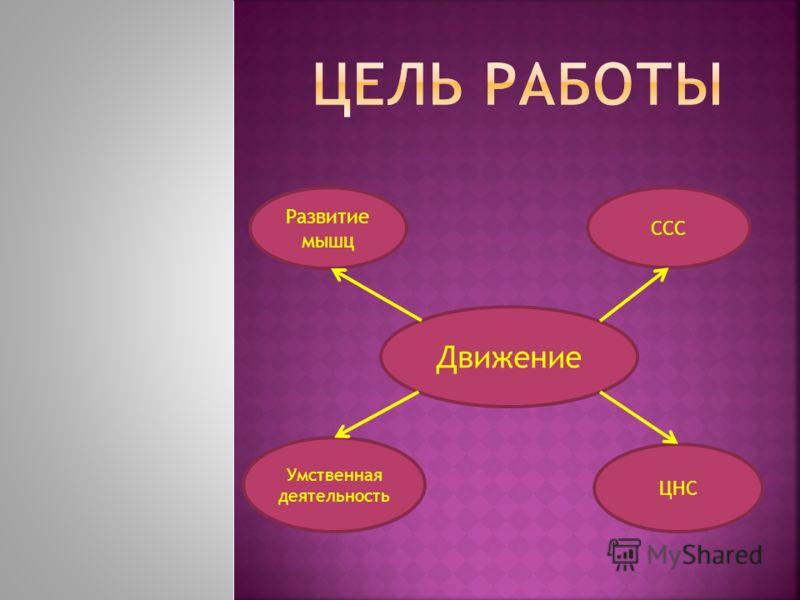 Движение Развитие мышц ЦНС ССС Умственная деятельность