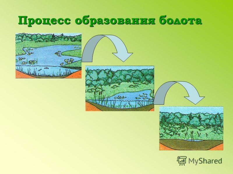 Процесс образования болота