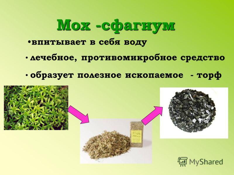 Мох -сфагнум впитывает в себя воду лечебное, противомикробное средство образует полезное ископаемое - торф
