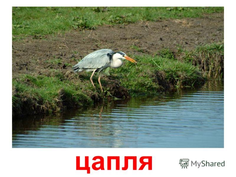 птицы (часть 1)