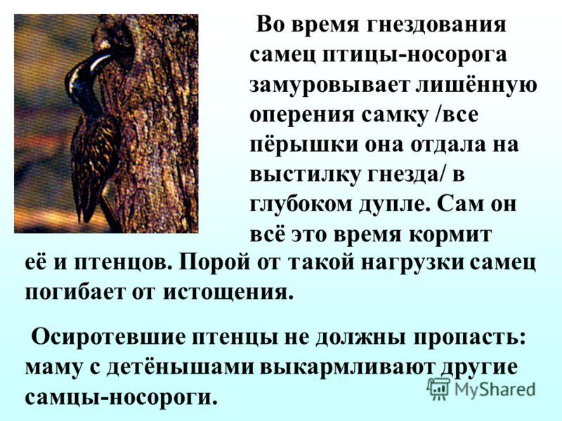 Ястреб-перепелятник выводит своих птенцов, согласуясь со временем появления потомства у синиц – главной его добычи. А сокол Леоноры – охотник за ласточками, живущий на скалистых островах Средиземного моря, осенью, так как кормит птенцов перелётными п