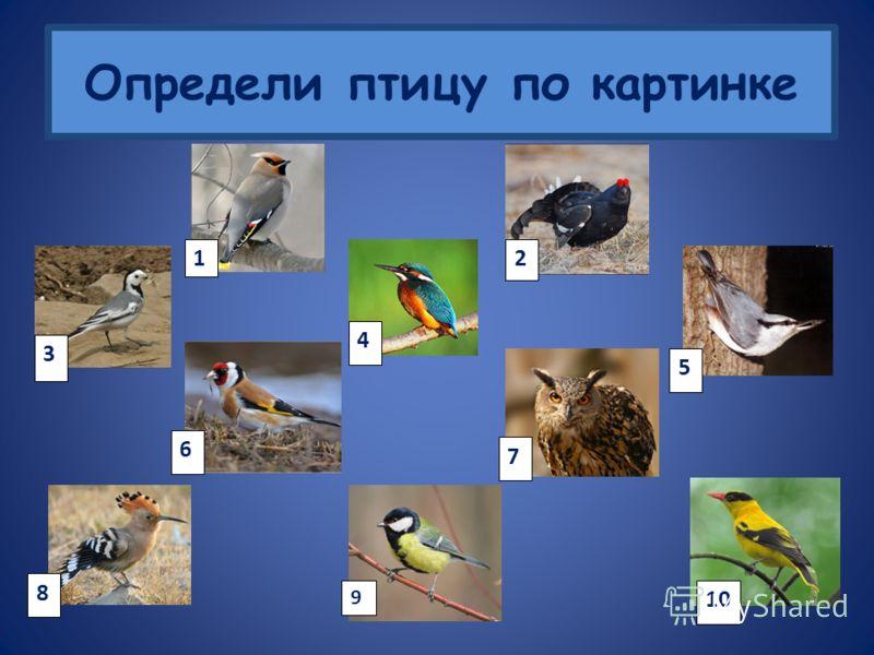 Голоса птиц 12345 678910