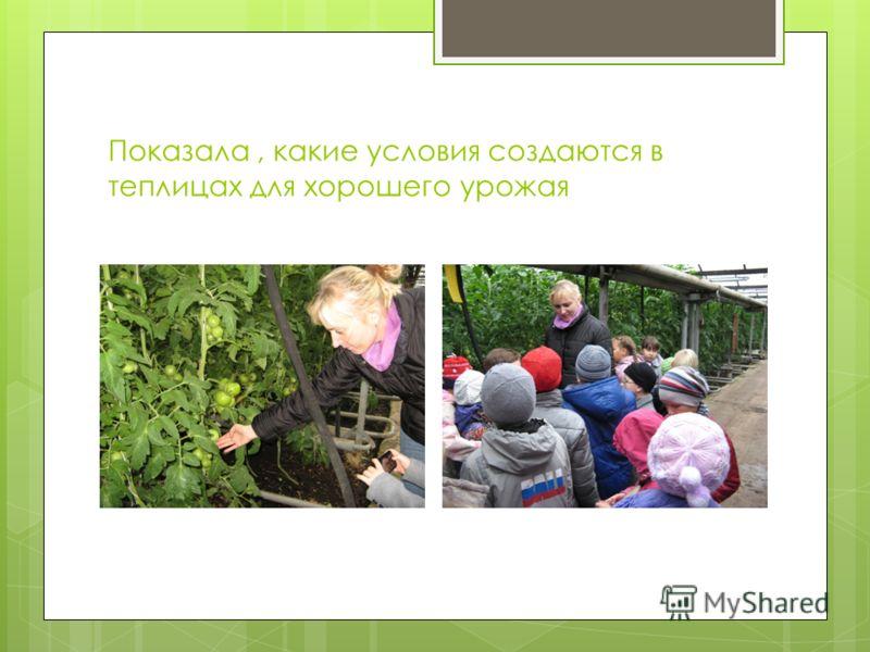 Показала, какие условия создаются в теплицах для хорошего урожая