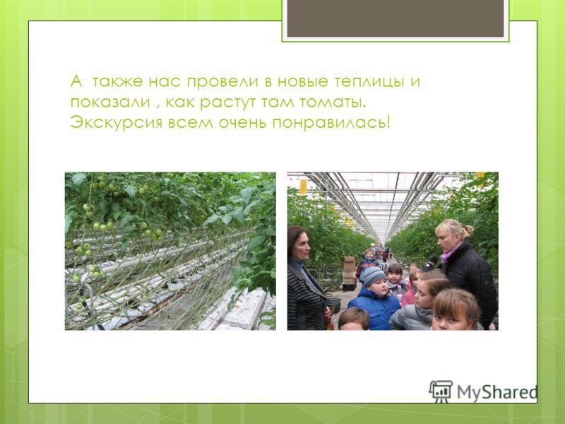 А также нас провели в новые теплицы и показали, как растут там томаты. Экскурсия всем очень понравилась!