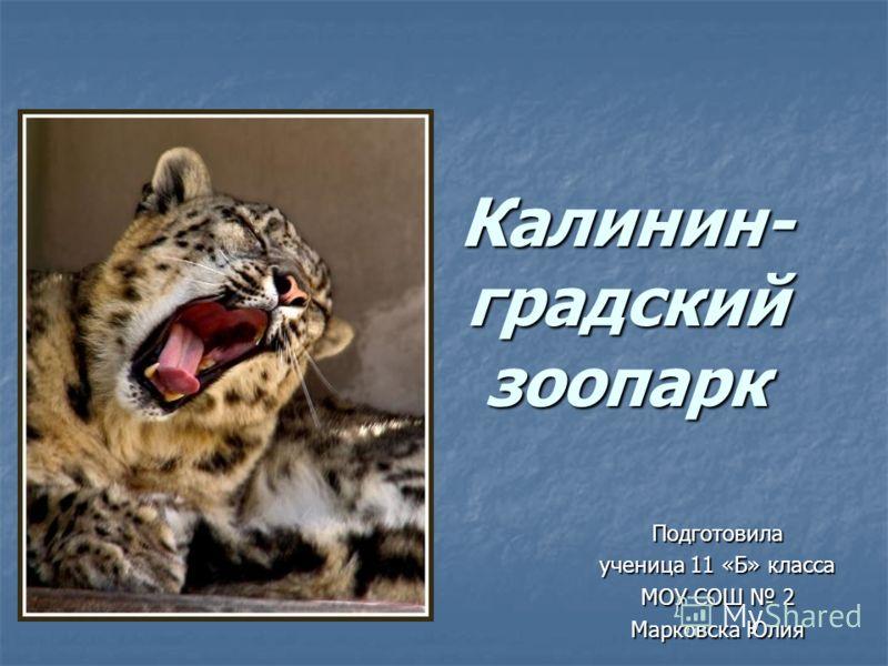 Калинин- градский зоопарк Калинин- градский зоопарк Подготовила ученица 11 «Б» класса МОУ СОШ 2 Марковска Юлия