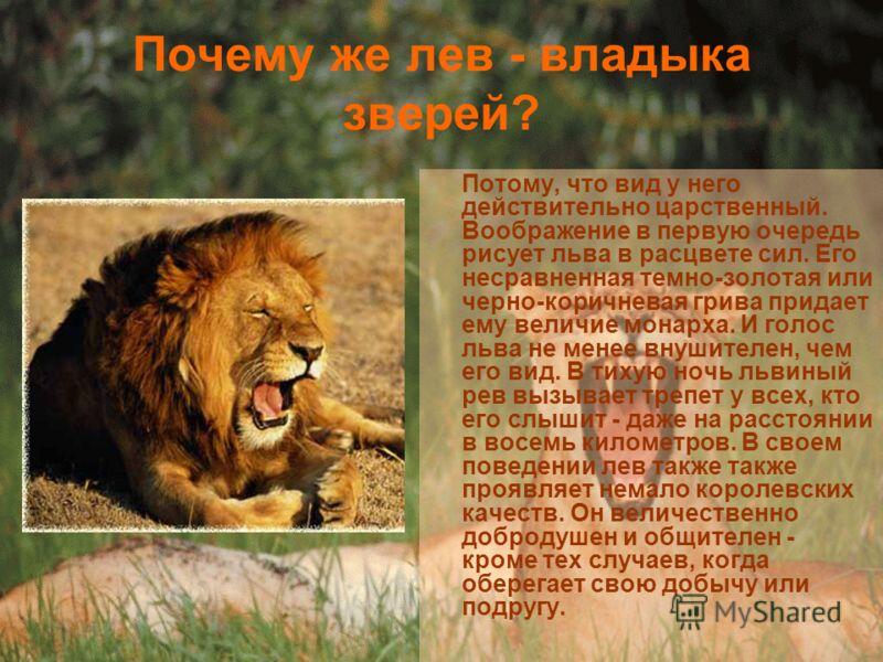 Почему же лев - владыка зверей? Потому, что вид у него действительно царственный. Воображение в первую очередь рисует льва в расцвете сил. Его несравненная темно-золотая или черно-коричневая грива придает ему величие монарха. И голос льва не менее вн
