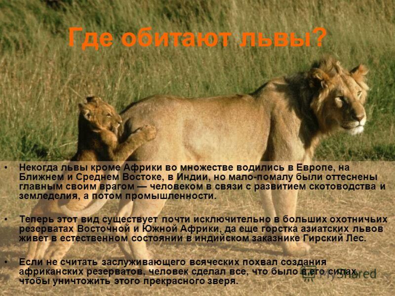 Где обитают львы? Некогда львы кроме Африки во множестве водились в Европе, на Ближнем и Среднем Востоке, в Индии, но мало-помалу были оттеснены главным своим врагом человеком в связи с развитием скотоводства и земледелия, а потом промышленности. Теп