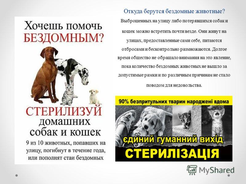 Откуда берутся бездомные животные? Выброшенных на улицу либо потерявшихся собак и кошек можно встретить почти везде. Они живут на улицах, предоставленные сами себе, питаются отбросами и бесконтрольно размножаются. Долгое время общество не обращало вн