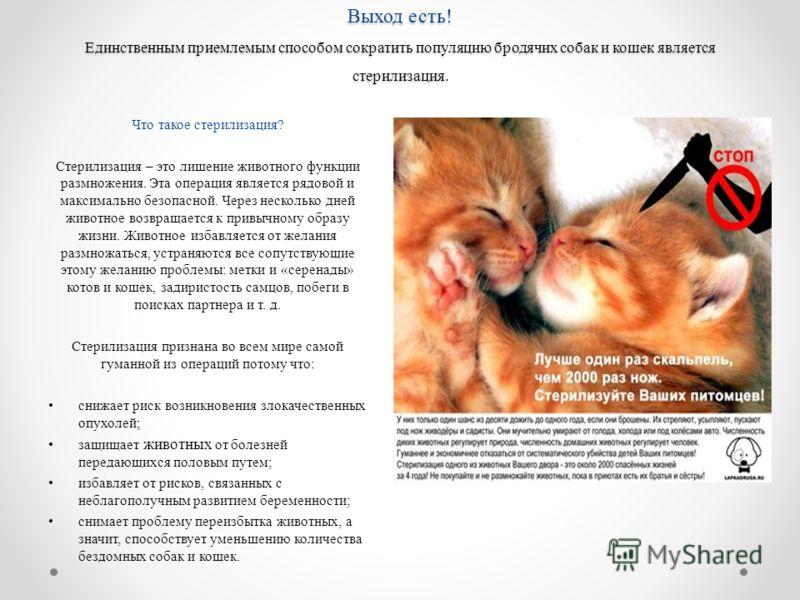 Выход есть! Единственным приемлемым способом сократить популяцию бродячих собак и кошек является стерилизация. Что такое стерилизация? Стерилизация – это лишение животного функции размножения. Эта операция является рядовой и максимально безопасной. Ч