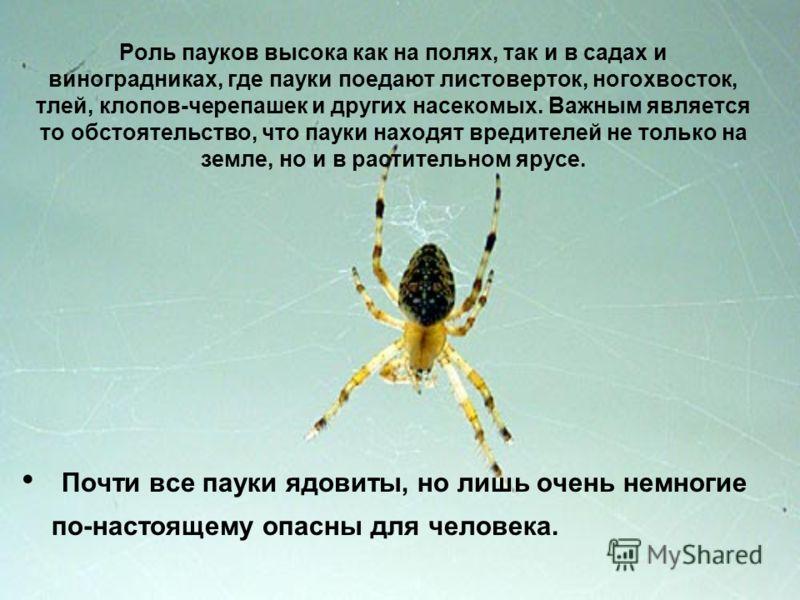 Роль пауков высока как на полях, так и в садах и виноградниках, где пауки поедают листоверток, ногохвосток, тлей, клопов-черепашек и других насекомых. Важным является то обстоятельство, что пауки находят вредителей не только на земле, но и в растител