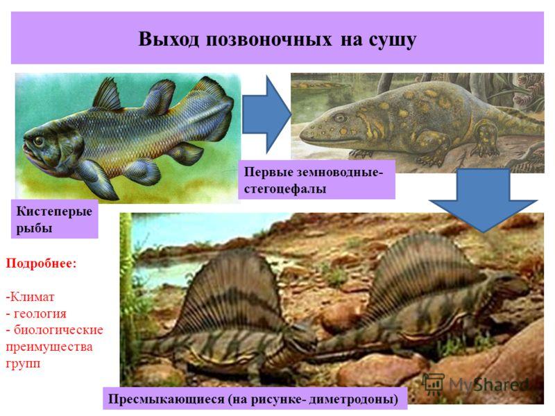 Выход позвоночных на сушу Кистеперые рыбы Первые земноводные- стегоцефалы Пресмыкающиеся (на рисунке- диметродоны) Подробнее: -Климат - геология - биологические преимущества групп