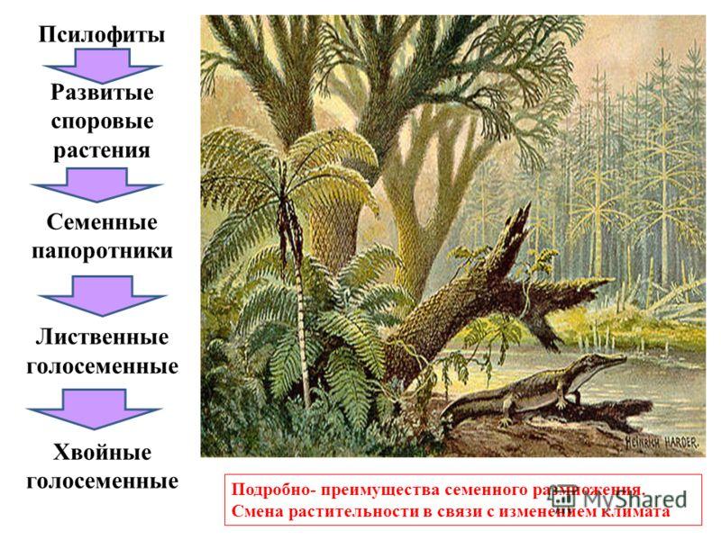 Псилофиты Развитые споровые растения Семенные папоротники Лиственные голосеменные Хвойные голосеменные Подробно- преимущества семенного размножения. Смена растительности в связи с изменением климата