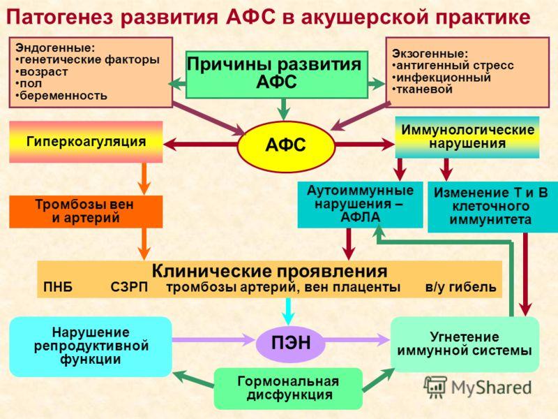 Патогенез развития АФС в акушерской практике Причины развития АФС Гиперкоагуляция Тромбозы вен и артерий Иммунологические нарушения Изменение Т и В клеточного иммунитета Аутоиммунные нарушения – АФЛА Клинические проявления ПНБ СЗРП тромбозы артерий,