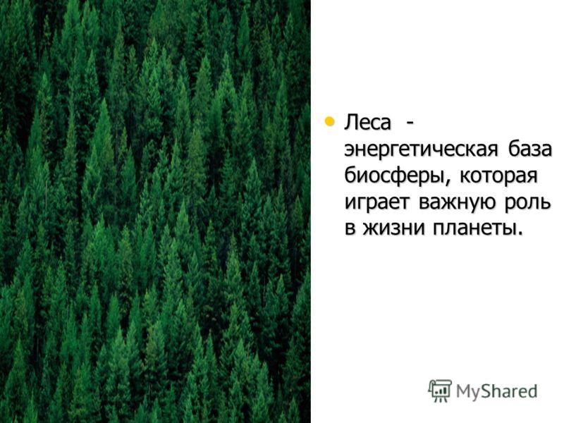 Леса - энергетическая база биосферы, которая играет важную роль в жизни планеты. Леса - энергетическая база биосферы, которая играет важную роль в жизни планеты.