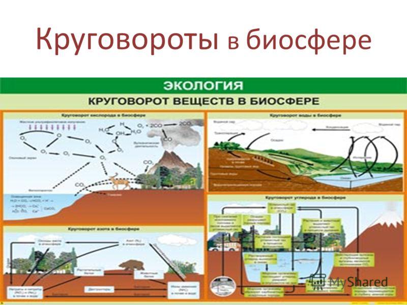 Круговороты в биосфере
