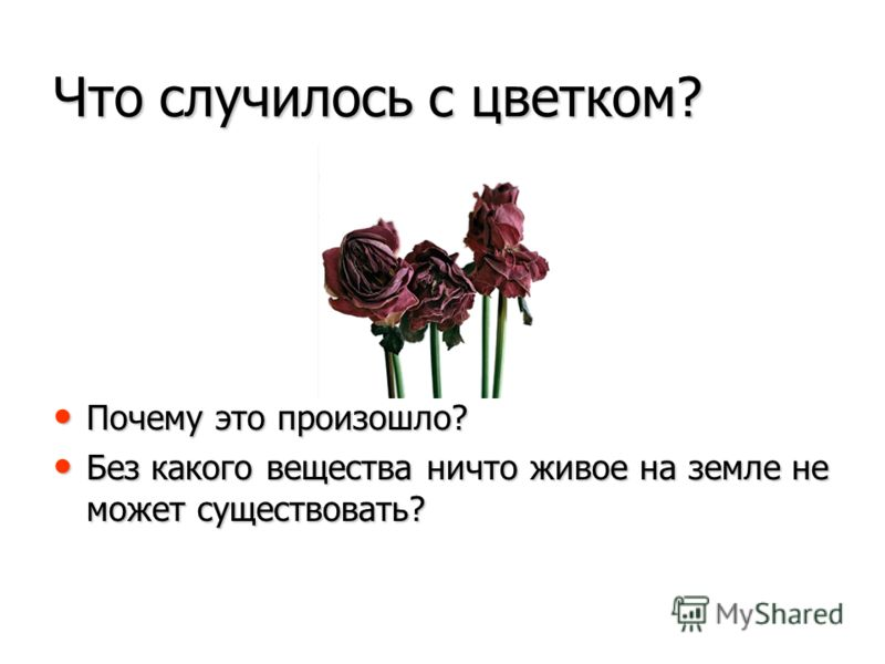 Что случилось с цветком? Почему это произошло? Без какого вещества ничто живое на земле не может существовать?