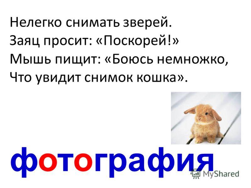 фотография Нелегко снимать зверей. Заяц просит: «Поскорей!» Мышь пищит: «Боюсь немножко, Что увидит снимок кошка».