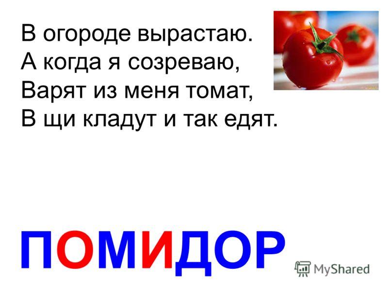 ПОМИДОР В огороде вырастаю. А когда я созреваю, Варят из меня томат, В щи кладут и так едят.