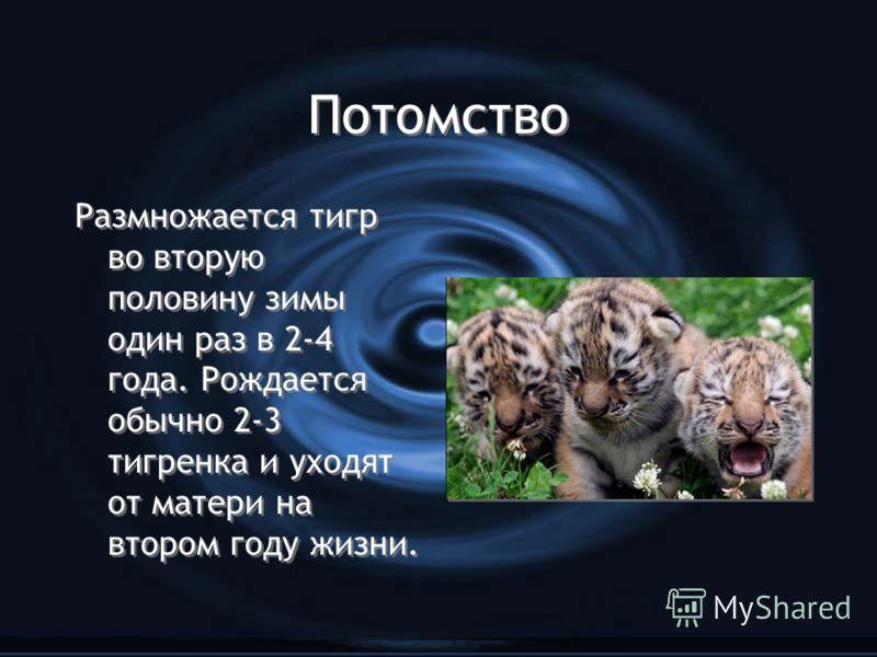 Потомство Размножается тигр во вторую половину зимы один раз в 2-4 года. Рождается обычно 2-3 тигренка и уходят от матери на втором году жизни.