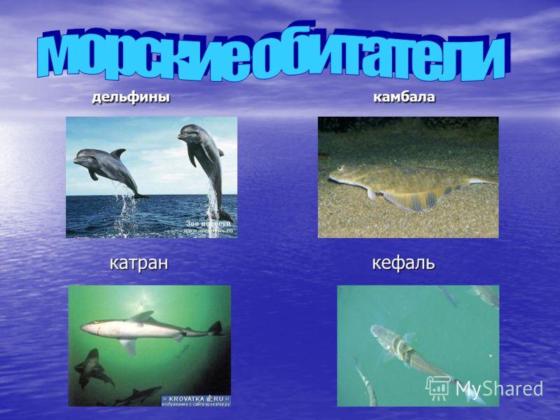 дельфины камбала дельфины камбала катран кефаль катран кефаль