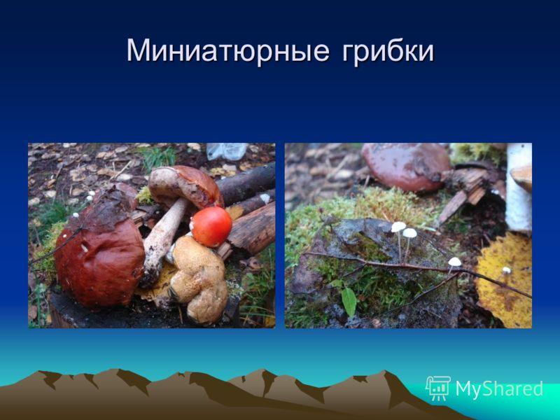 Миниатюрные грибки