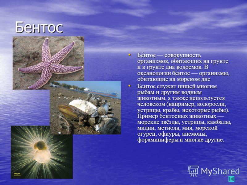 Бентос Бе́нтос совокупность организмов, обитающих на грунте и в грунте дна водоемов. В океанологии бе́нтос организмы, обитающие на морском дне Бе́нтос совокупность организмов, обитающих на грунте и в грунте дна водоемов. В океанологии бе́нтос организ