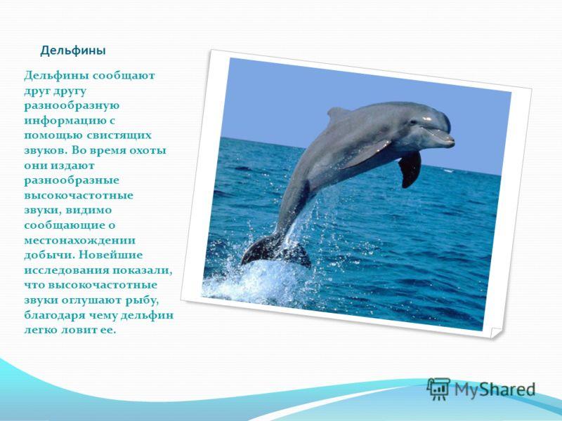Дельфины Дельфины сообщают друг другу разнообразную информацию с помощью свистящих звуков. Во время охоты они издают разнообразные высокочастотные звуки, видимо сообщающие о местонахождении добычи. Новейшие исследования показали, что высокочастотные