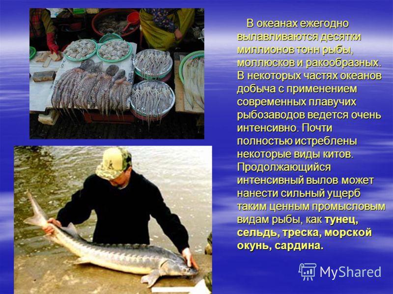 В океанах ежегодно вылавливаются десятки миллионов тонн рыбы, моллюсков и ракообразных. В некоторых частях океанов добыча с применением современных плавучих рыбозаводов ведется очень интенсивно. Почти полностью истреблены некоторые виды китов. Продол