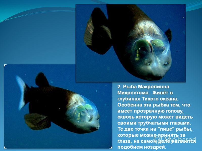 1. В основном, взглянув на животное, мы сразу понимаем, кто это перед нами. Например, рыб мы отличаем по продолговатому телу, покрытому чешуёй, плавникам, похожему на опахало хвосту, жаберным щелям. Но есть рыбы, поражающие своим совсем
