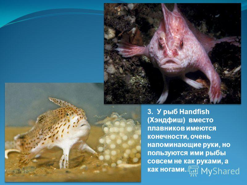 2. Рыба Макропинна Микростома. Живёт в глубинах Тихого океана. Особенна эта рыбка тем, что имеет прозрачную голову, сквозь которую может видеть своими трубчатыми глазами. Те две точки на
