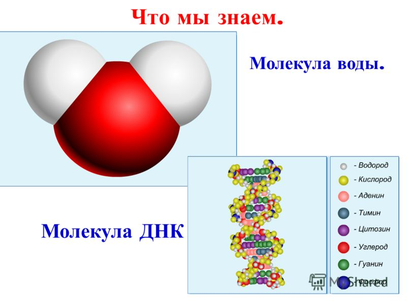 Молекула воды. Молекула ДНК Что мы знаем.