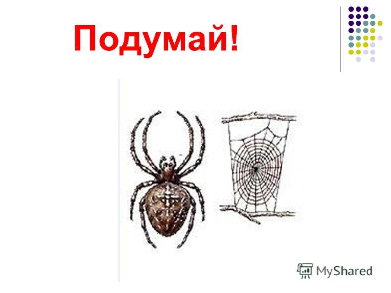 животные звериптицынасекомыерыбы