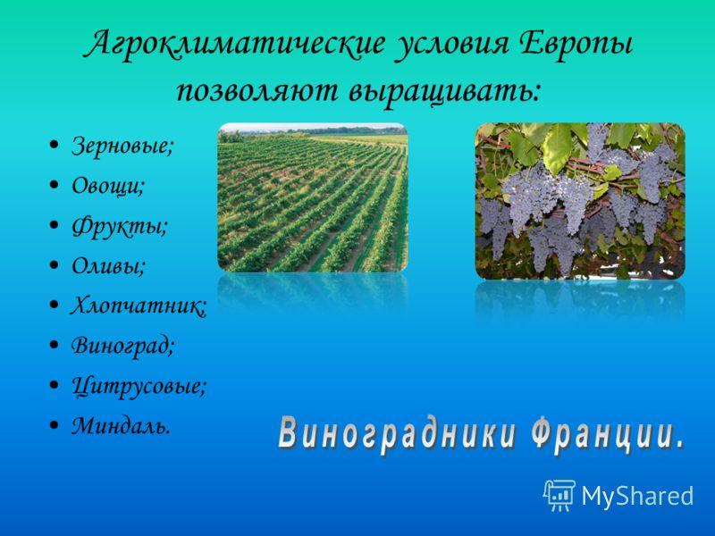 Агроклиматические условия Европы позволяют выращивать: Зерновые; Овощи; Фрукты; Оливы; Хлопчатник; Виноград; Цитрусовые; Миндаль.