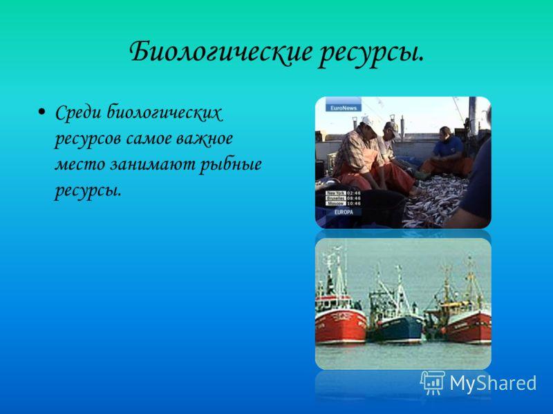 Биологические ресурсы. Среди биологических ресурсов самое важное место занимают рыбные ресурсы.