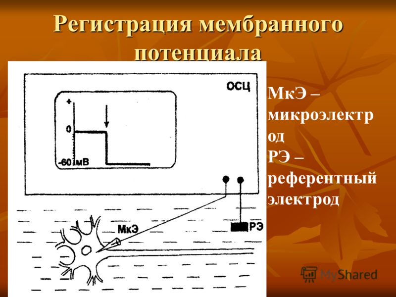 Регистрация мембранного потенциала МкЭ – микроэлектр од РЭ – референтный электрод
