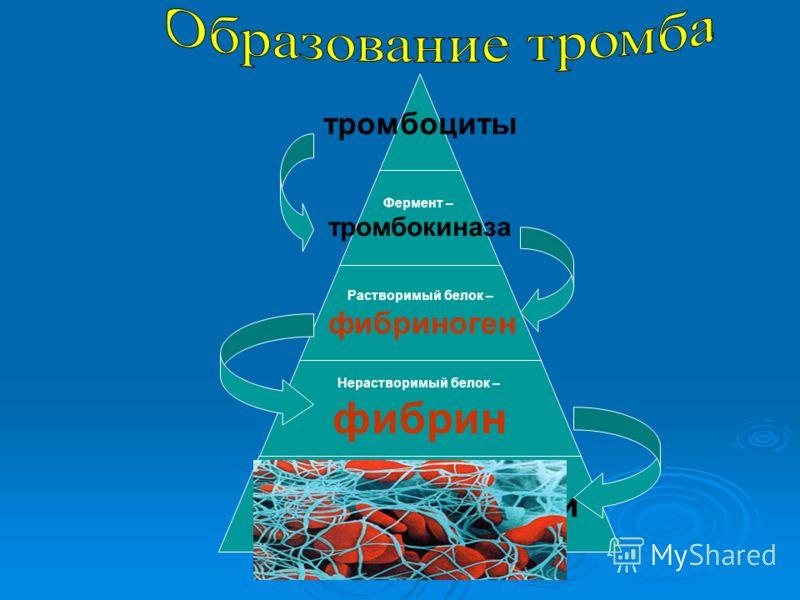 Фибриноген фото